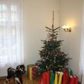 Gwiazdka dla dzieci 2012